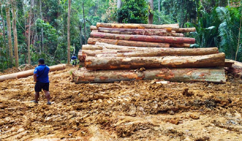 The Orang Asli community in Kampung Ulu Geruntum in Gopeng alleged that a logging company encroached their ancestral land and fell trees. ― Picture courtesy of Roz Hussin