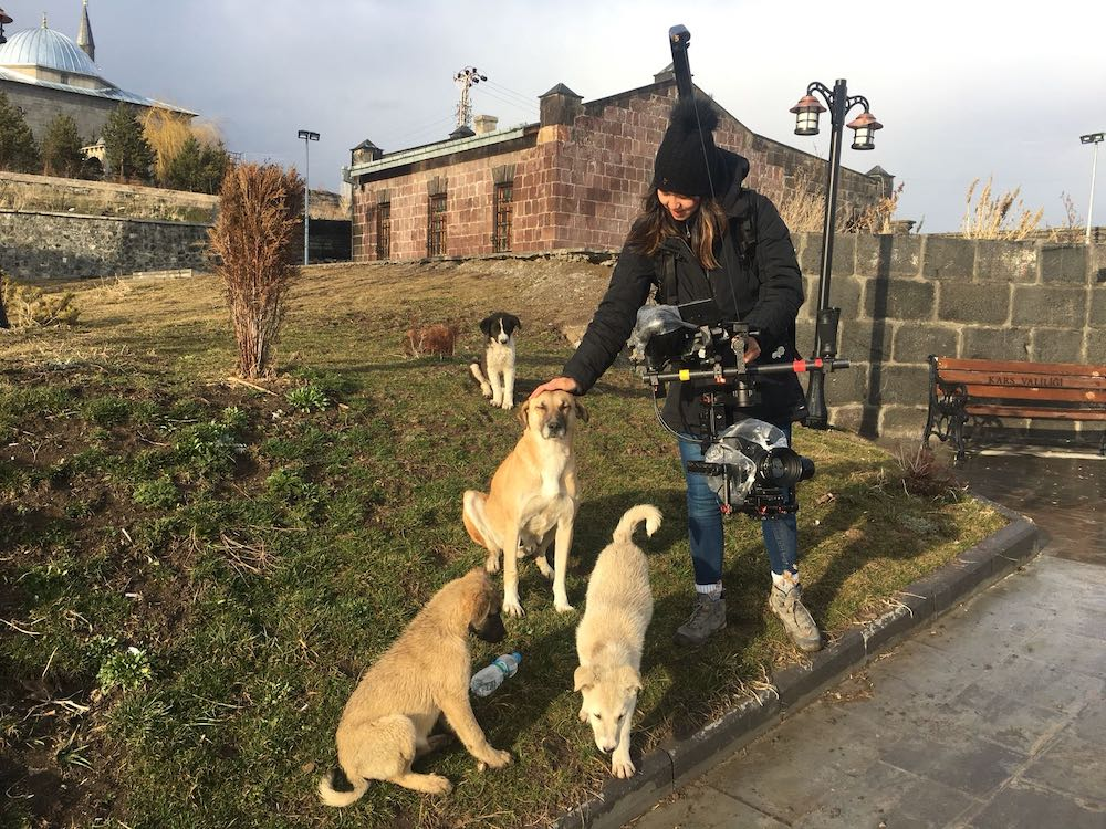 The documentary 'Stray' depicts daily life in Istanbul through the eyes of three dogs that roam its streets. — Picture via Facebook/Stray