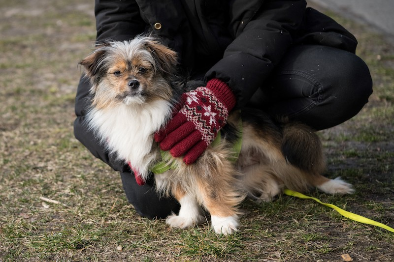 Adopted mixed breed dog Uschi looks up during a walk with her new owner Annelie Salomon in Hasenheide park on March 19, 2021 in Berlin. — AFP pic