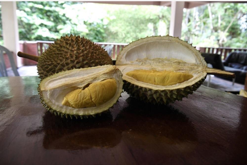 Musang King durians are seen during a tour at Lembah Temir Resort in Raub September 13, 2020. — Bernama pic