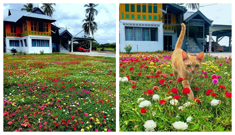 View from outside Linda's home with the garden filled with colourful flowers. — Picture courtesy of Linda Sanusi