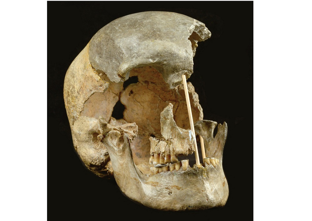 This handout picture released on April 7, 2021, by the National Museum of Prague shows the skull of a modern human female individual from Zlaty kun. — Picture courtesy of Prague National Museum via AFP