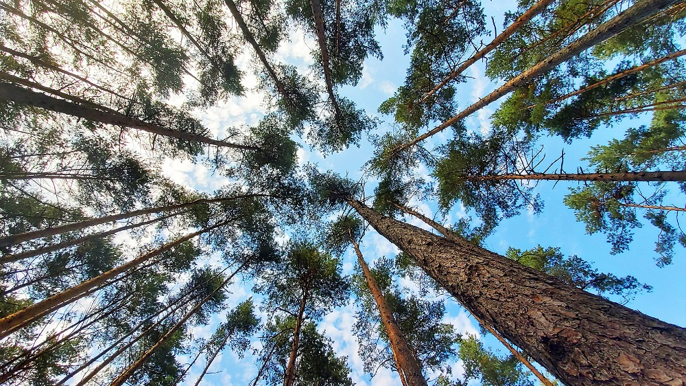 Noise pollution poses a long-term risk to tree populations and plant diversity that may persist even after the sources of excess noise are removed. — Shutterstock pic via ETX Studio