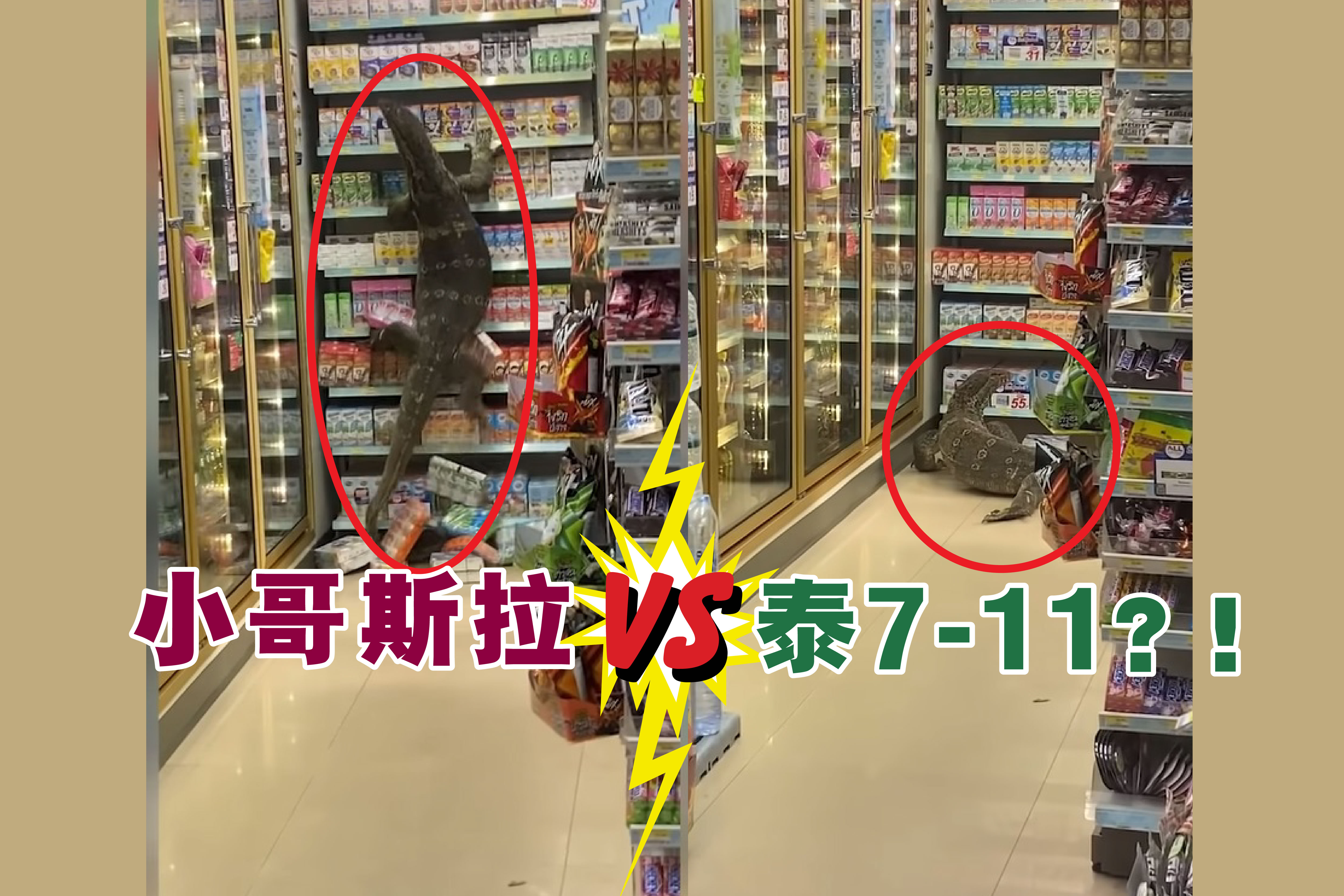"""这只巨蜥先冲去冷藏柜,发现无法""""开门""""觅食后,就直接转头爬上旁边的货架。-视频截屏/精彩大马制图-"""