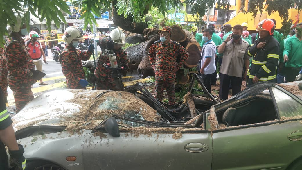 Last Tuesday, a mechanic died when a tree fell on the Proton Wira he was driving along Jalan Perak around 9.30am shortly after a morning downpour. — Picture courtesy of the Fire and Rescue Department