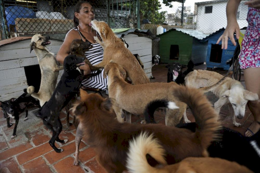 Cuban Noris Perez plays with dogs at a private animal shelter in Havana, on September 29, 2020. — AFP pic