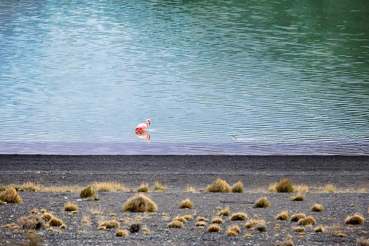 Standing alone isn't all bad; certainly this flamingo is enjoying the solitude and the view.