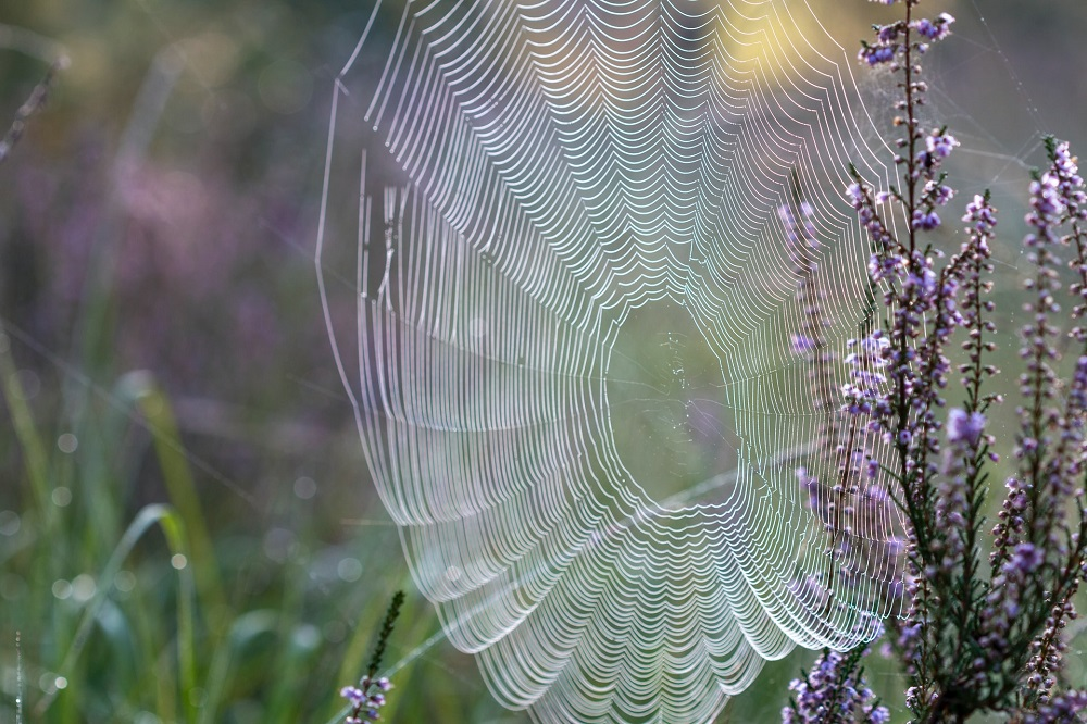 Spider silk is thought to be one of the world's most hard-wearing materials. ― Unsplash pic via ETX Studio