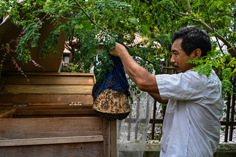 What a buzz: Saving Malaysia's bees, one nest at a time | Life | Malay Mail