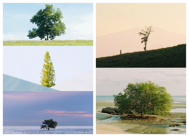 Rafiq Farhan's compilation of the trees made other Twitter users share their own pictures of solo trees. — Picture via Twitter/RafiqFarhan
