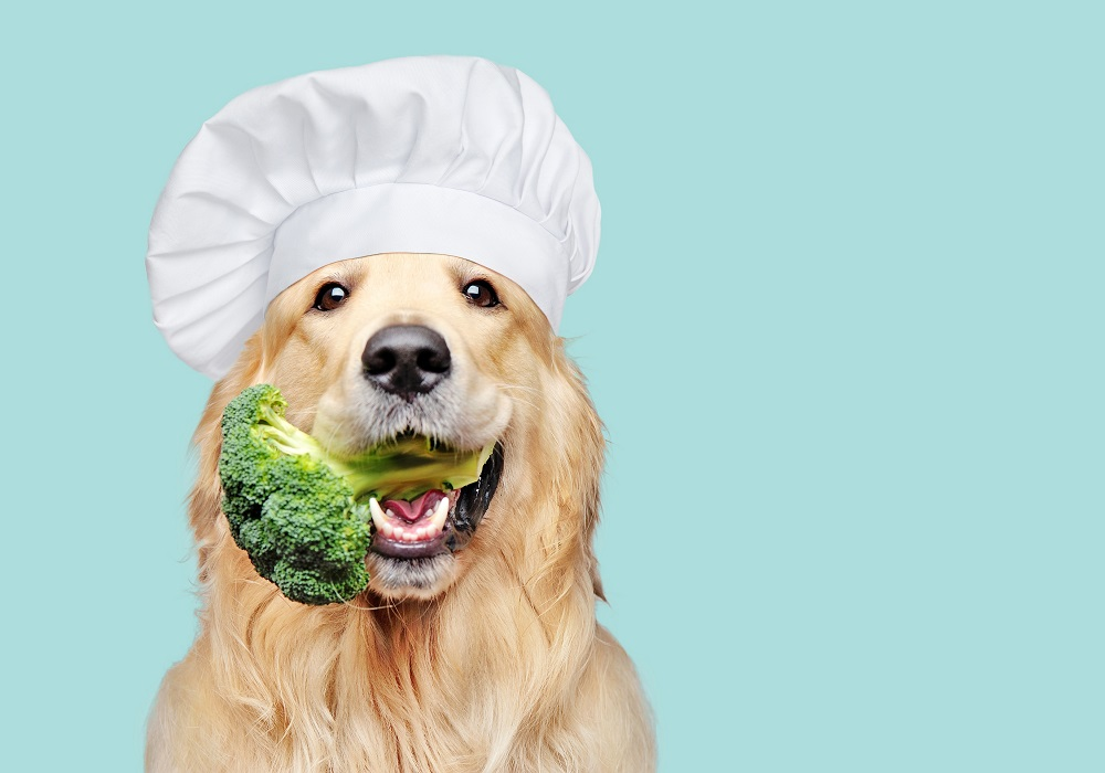 The demand for vegetarian products for dogs is growing. — Shutterstock pic via ETX Studio