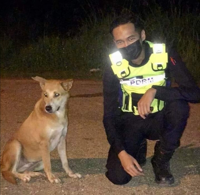 Three policemen from Kota Tinggi district have won social media praise after they helped a stray dog to get treated following an accident. — Photo via Facebook/ Kuan Chee Heng