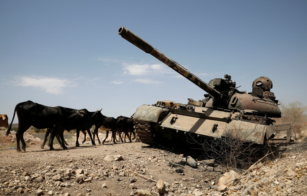 Cows walk past a tank damaged in fighting between Ethiopian government and Tigray forces, near the town of Humera, Ethiopia March 3, 2021. —- Reuters pic