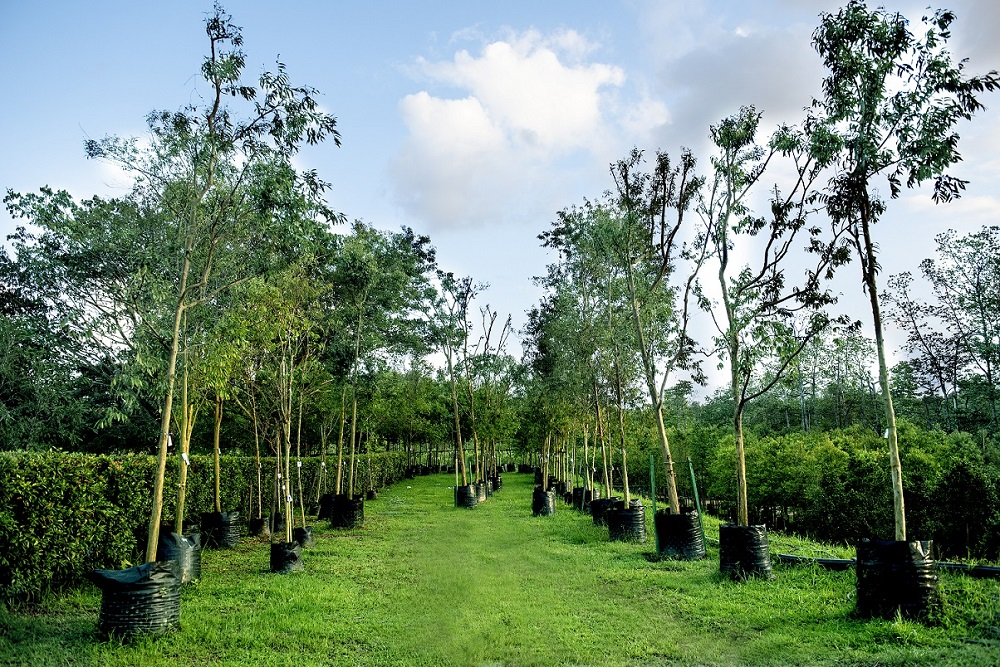 As many as two trees are replanted each time a tree is cut down at Sunway City Iskandar Puteri to restore the ecosystem. — Picture courtesy of Sunway