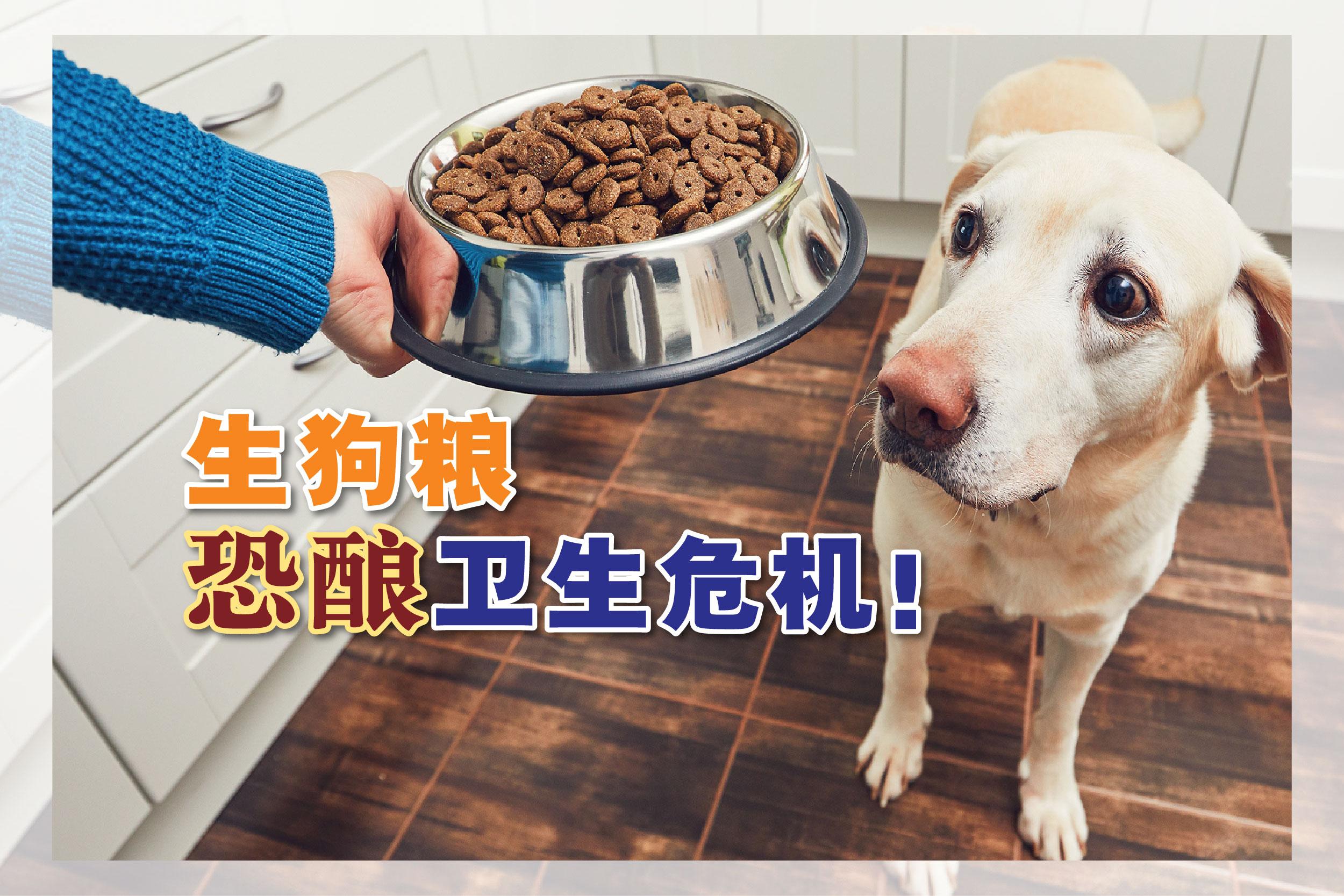 研究人员说,给狗喂食生狗粮的趋势,可能会助长耐抗生素细菌蔓延。-Getty Images,精彩大马制图-