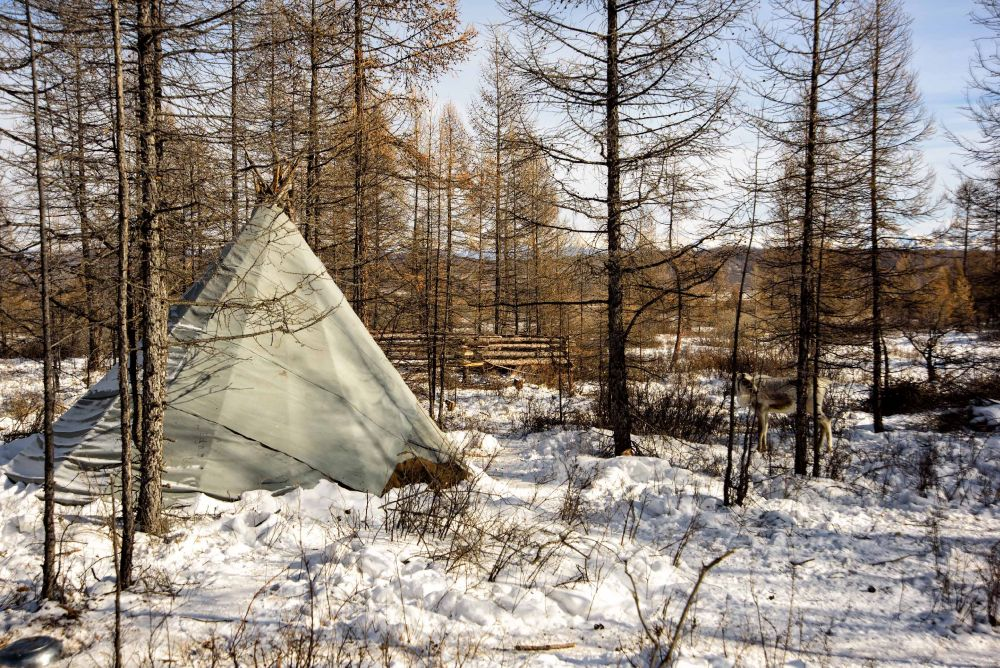 The kota is a not-too-distant cousin of the tipi-style shelters used by the Sami, an indigenous people of the Nordic countries. — AFP pic
