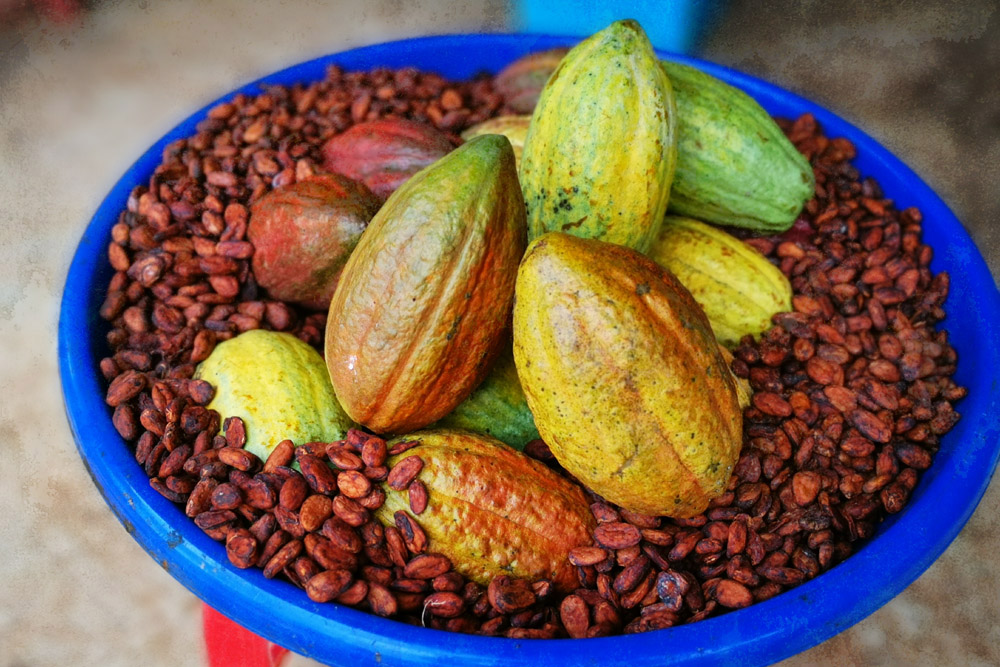 Cacao beans and pods.