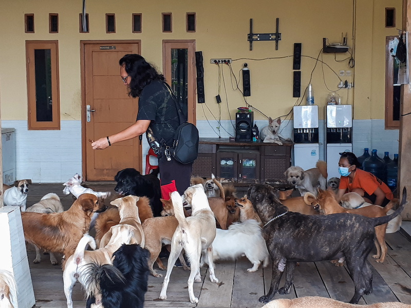 A founder of the Animal Defenders, Doni Herdaru Tona, feeds rescued dogs at their shelter in Parung, Bogor, West Java province, Indonesia August 9, 2021. — Reuters pic