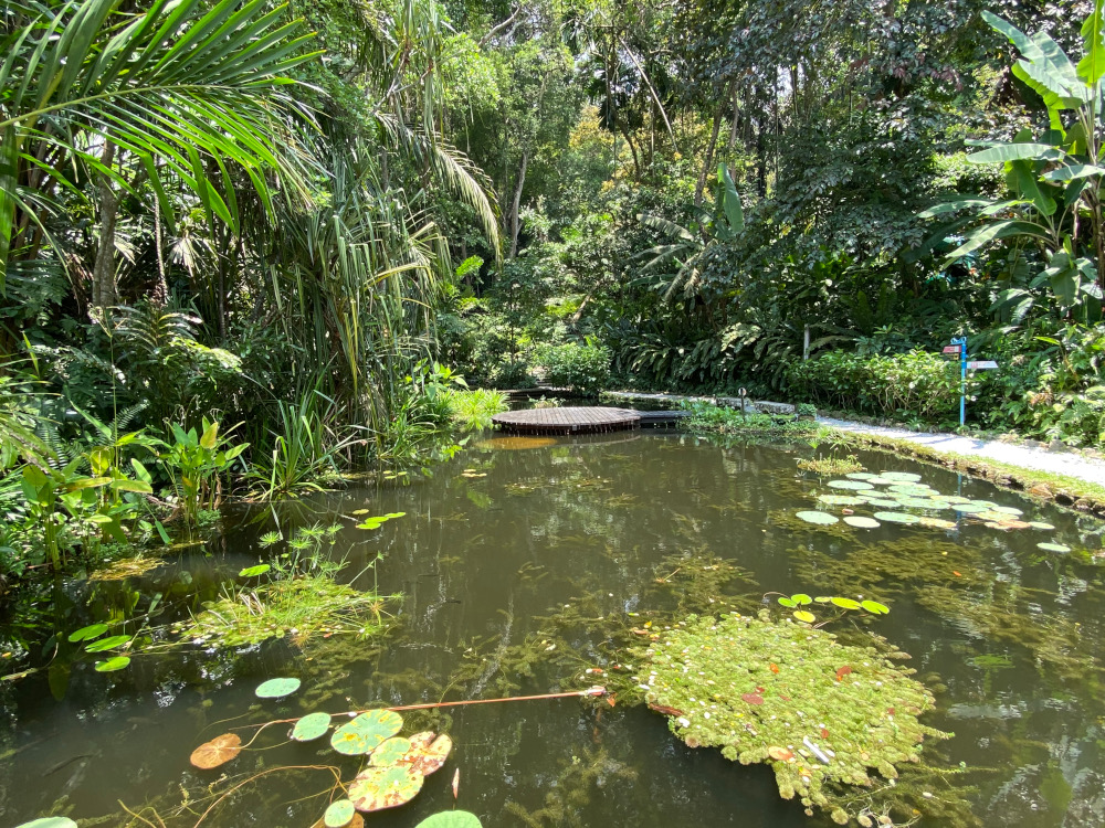 The beautiful pond at Tropical Spice garden in Teluk Bahang. ― Picture by Steven Ooi KE