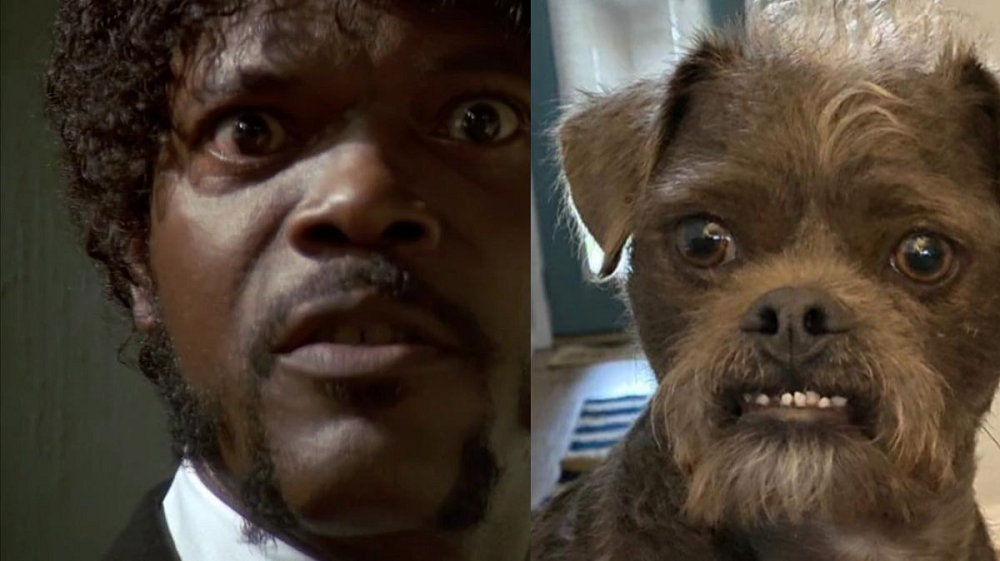 A rescue dog Dr Handsome (right) has been compared to US actor Samuel L. Jackson (left). ― Picture from Facebook/ Justin Holbrook Stiehl