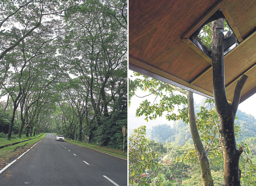Trees flank the road leading to the retreat, a sign of the natural serenity that lies ahead (left). A fine example of sustainable architecture, the house guest was built around the existing trees (right).