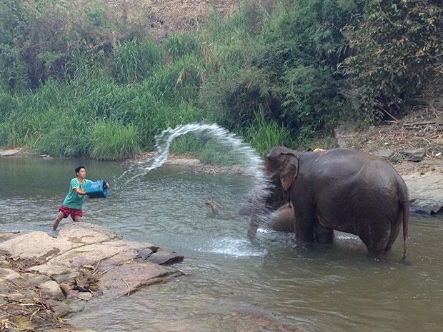 Shower time! The elephants enjoying their river bath.