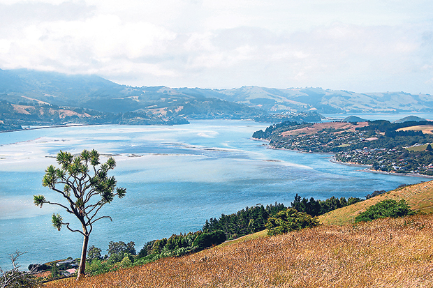 Wind-swept Otago Peninsula