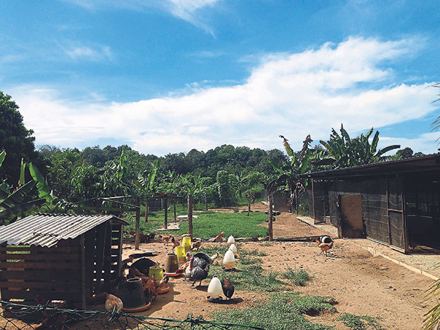 Uncle Rani's Chicken Farm sits on five acres of land deep inside Kampung Gombak. — Pictures by Vivian Chong