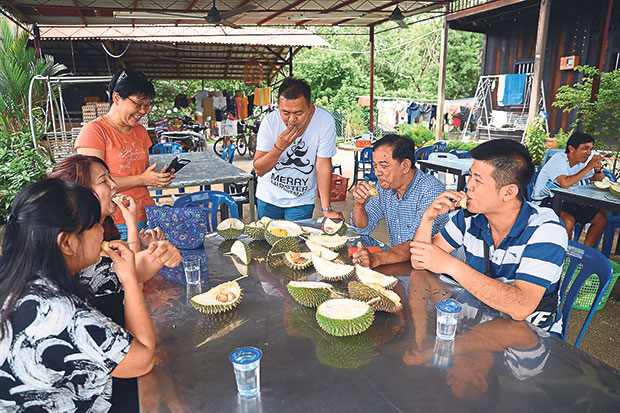 Customers at the Lim Brothers Farm having a durian feast