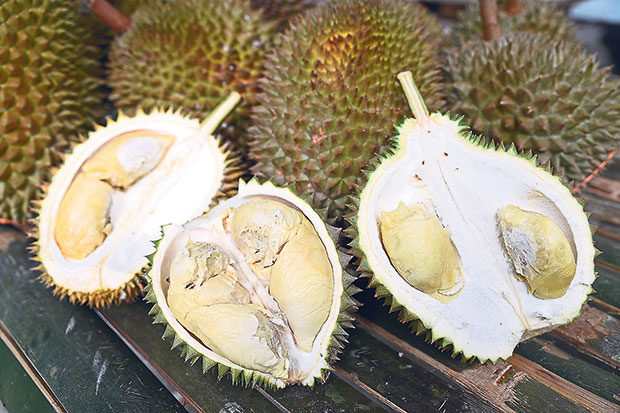 Jungle durians or wild durians that are equally sweet and delicious at the Okay Jungle Durian Farm