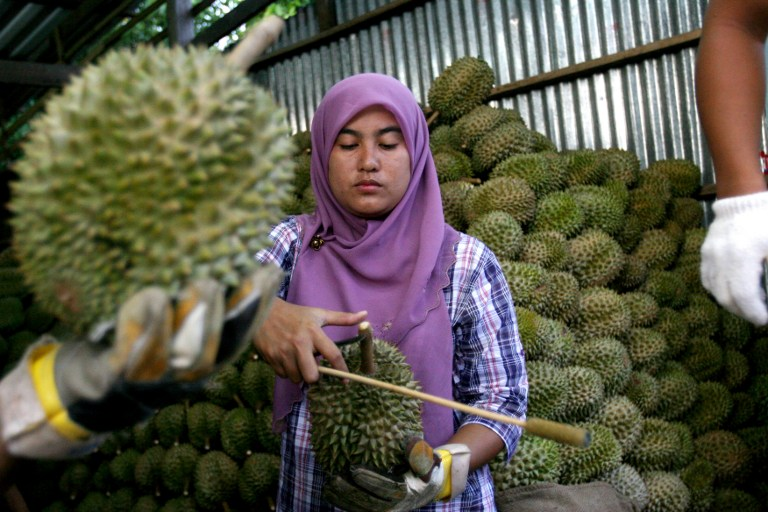 Malaysia expects to export about 1,000 metric tonnes of frozen whole durian to China every month. — AFP file pic