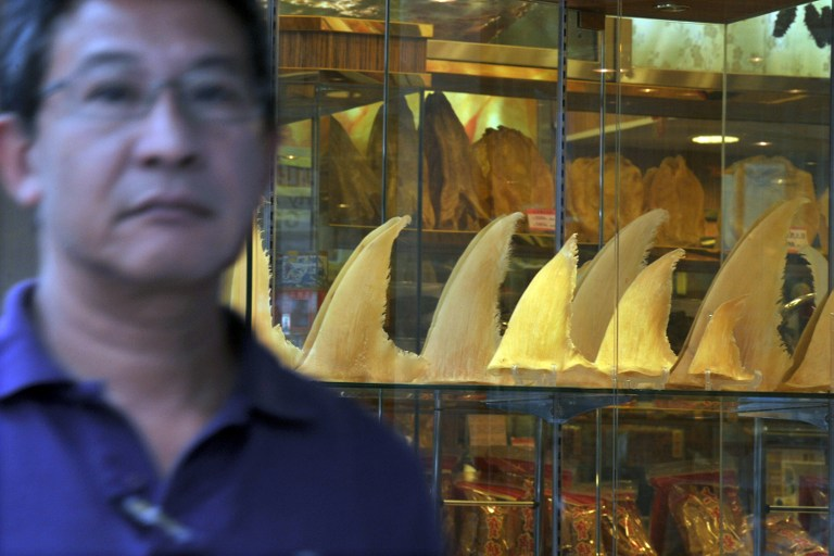 Guinea tops the list in shipping shark fins to Hong Kong. — AFP pic