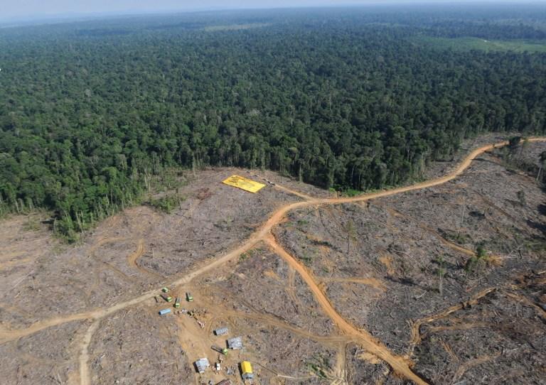Blame 'Big 6' timber firms for deforestation, not illegal loggers, Sarawak DAP says | Malaysia | Malay Mail
