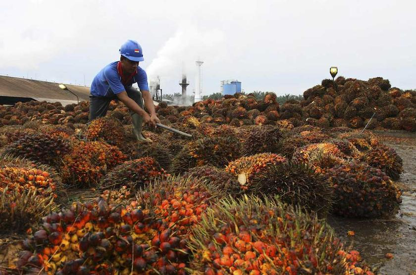 The action could escalate a trade dispute between Indonesia — the world's top palm oil producer — and the EU, which plans to end its use of biofuels by 2030, citing concerns over widespread deforestation caused by the sector. — Reuters pic