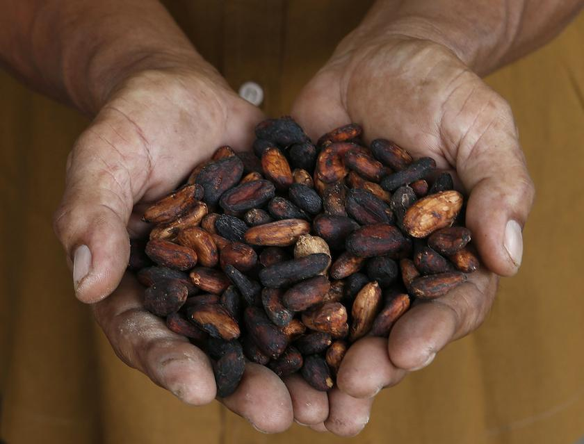 Malaysia is the second-largest cocoa bean processing country in Asia. — Reuters pic
