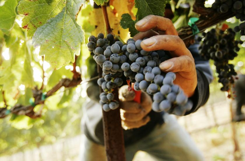 The Domaine de Penglai release will mark a grand debut out of one of the most hotly anticipated wine projects in recent years and coincide with a 10-year milestone. — Reuters pic