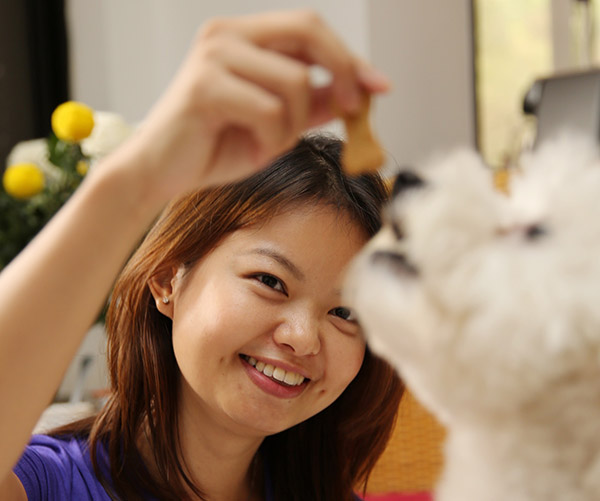 Chan Chui Shia feeds Miki its favourite homemade Oats and Cheddar dog treat. – Pictures by Choo Choy May