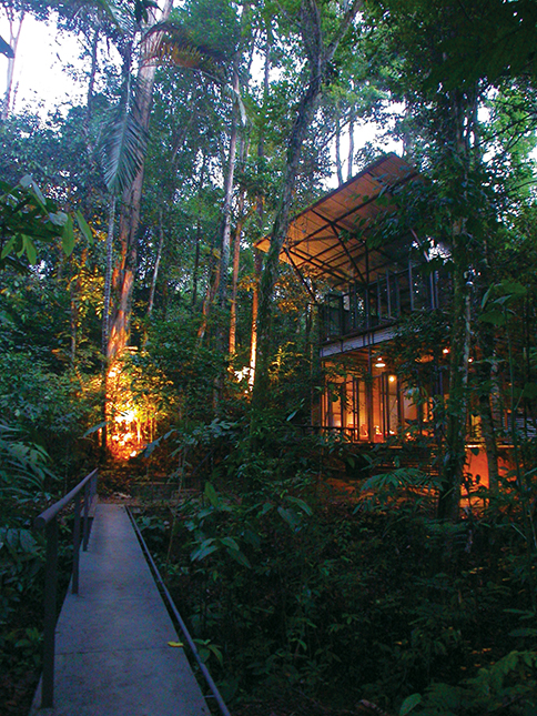 The forest lights up in the evening (Sekeping Serendah)
